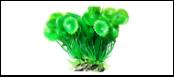 Уют Растение аквариумное 12 см, Шитолистник с осотом 0,1кг ВК301 Kormberi.ru магазин товаров для ваших животных