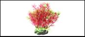 Уют Растение аквариумное 12 см, Гемиантус фиолетово-зеленый 0,1кг ВК310 Kormberi.ru магазин товаров для ваших животных