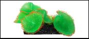 Уют коралл аквариумный 10 см,силикон Антоплеур колония зеленая ВК708 (Р) Kormberi.ru магазин товаров для ваших животных