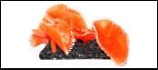 Уют коралл аквариумный 10 см,силикон Актиния Антоплеур колония оранжевая ВК709 (Р) Kormberi.ru магазин товаров для ваших животных