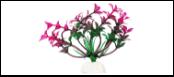 Уют Растение аквариумное 10 см, Гемиантус фиолетово-зеленый 0,02кг ВК109 Kormberi.ru магазин товаров для ваших животных