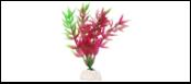 Уют Растение аквариумное 10 см, Гетерантера фиолетово-зеленая 0,02кг ВК106 Kormberi.ru магазин товаров для ваших животных
