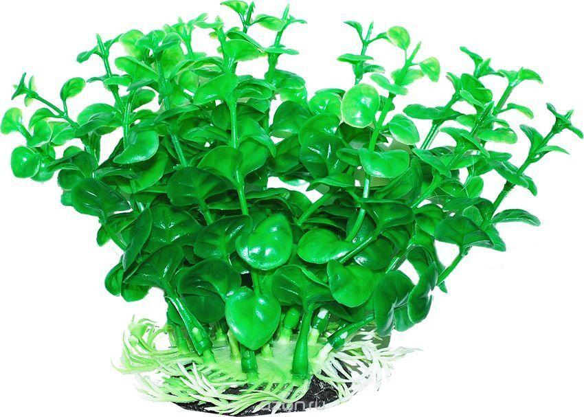 Уют Растение аквариумное 12 см, Бакопа зеленая 0,1кг ВК302 Kormberi.ru магазин товаров для ваших животных