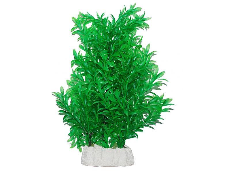 Уют Растение аквариумное 24-32 см, Гигрофила ВК514 Kormberi.ru магазин товаров для ваших животных